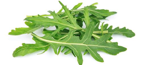 Выращивание ранней зелени: рукола