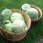 как сохранить капусту свежей до весны