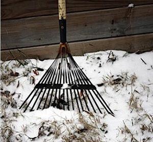 как правильно сажать под зиму