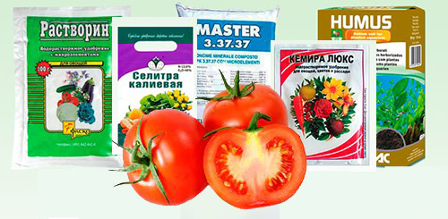 При какой температуре держать рассаду помидор