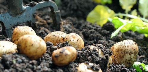 Овощи, которые просто выращивать