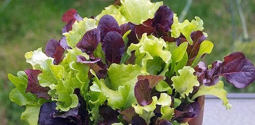 Какие овощи легче всего вырастить на даче