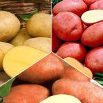самые рассыпчатые сорта картофеля