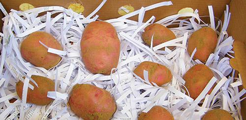 Хранить картошку можно в бумаге