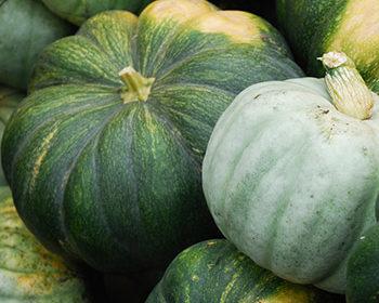 сорта тыкв с зеленой кожурой