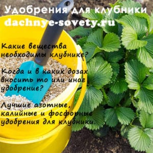 все виды удобрений под клубнику
