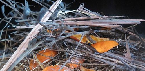 Сухие шкурки апельсина для розжига