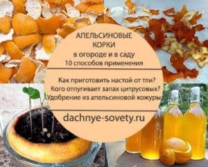 как применять апельсиновые корки в огороде и в саду