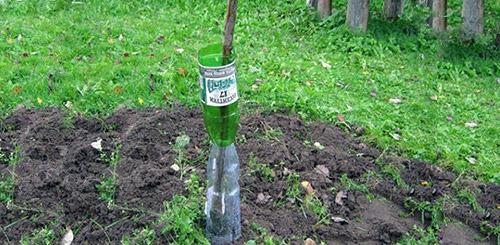 Пластиковая бутылка - средство от грызунов