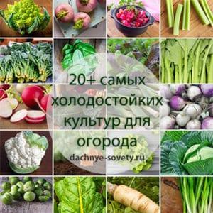 холодостойкие овощи для огорода