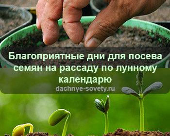 благоприятные дни для посева семян на рассаду