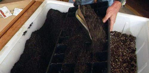 Почвенные смеси под рассаду баклажанов