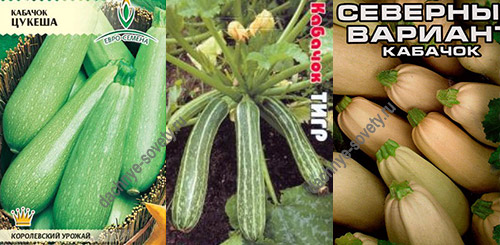 Какие кабачки выращивать