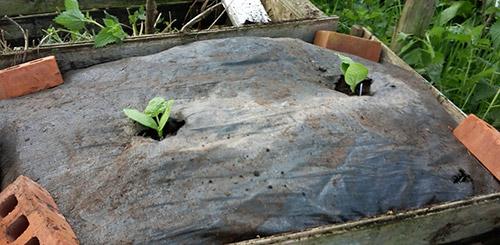 Место под кабачки в огороде