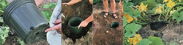 Самополив на кабачковой плантации
