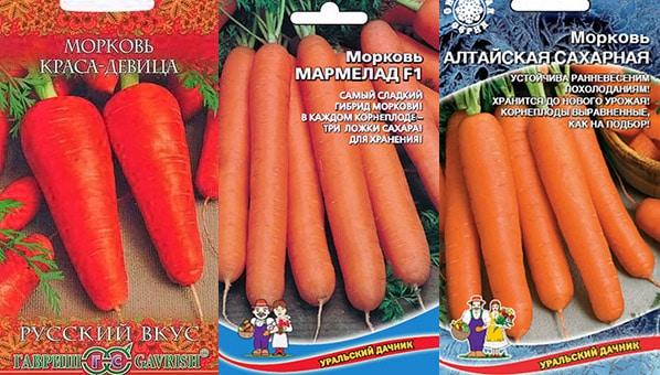Морковь сладкая