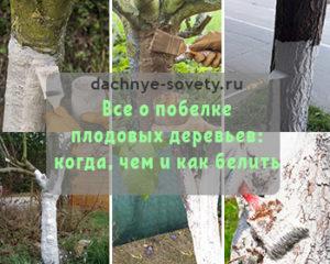 нужно ли белить деревья в саду