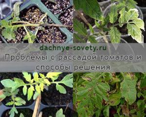 проблемы рассады томатов
