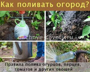 как поливать огород