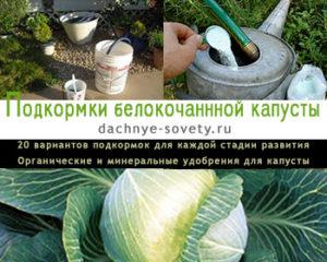 Чем подкармливать капусту