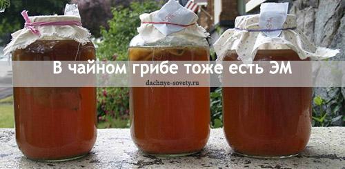 Эффективные микроорганизмы в чайном грибе