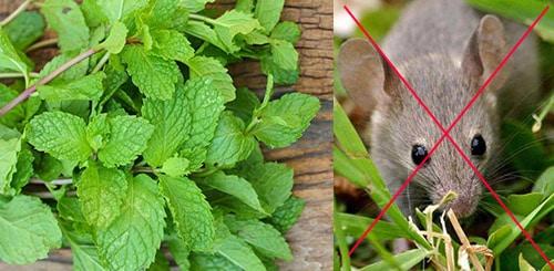 Растения против грызунов