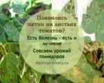 пятна на листьях томатов