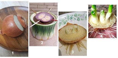 Зеленые перья лука можно получить из части луковицы
