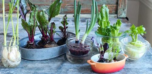 Выращиваем зелень на подоконнике ради витаминов
