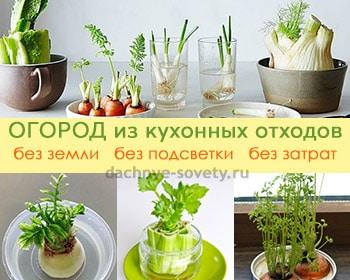 зелень на подоконнике выращивание из обрезков