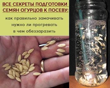 Готовим к посеву семена огурцов