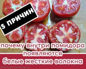 Причины появления белых прожилок в помидорах