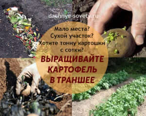 выращиваем картофель в траншееях