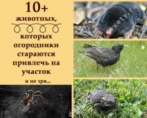 животные в саду и огороде: польза или вред