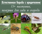 полезные насекомые для огорода и сада