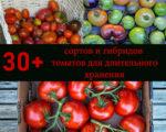 томаты, которые долго хранятся: сорта и гибриды