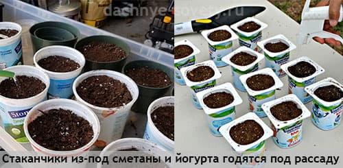 Рассадные горшочки из пластиковых стаканчиков