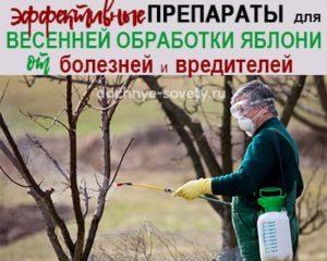 Чем обработать яблони весной