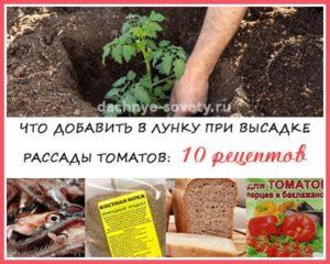 что положить в лунку при высадке помидоров в грунт