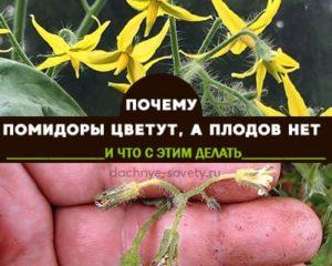 томаты цветут, но не завязываются